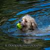 1408_Braffett dogs_201