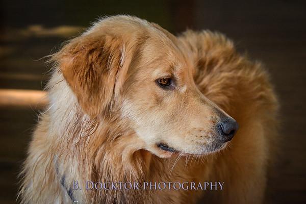 1408_Braffett dogs_314