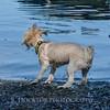 1408_Braffett dogs_257