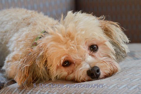 1408_Braffett dogs_292