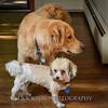 1408_Braffett dogs_315
