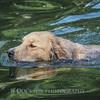 1408_Braffett dogs_026