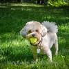 1408_Braffett dogs_148