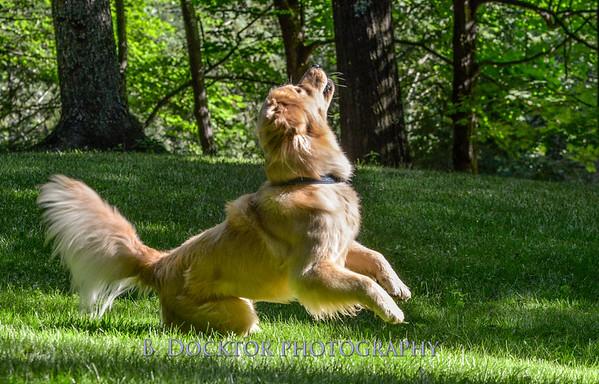1408_Braffett dogs_100