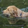 1408_Braffett dogs_027