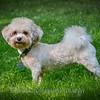 1408_Braffett dogs_147