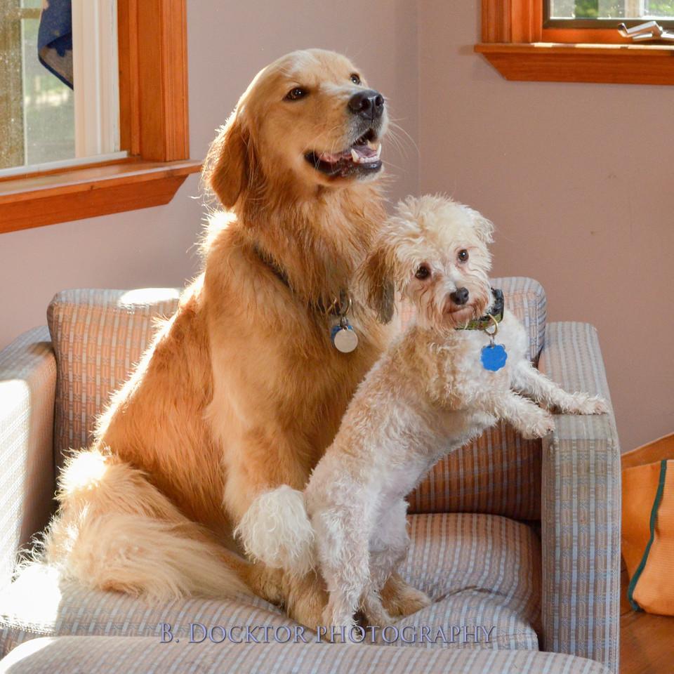 1408_Braffett dogs_278