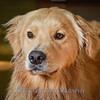 1408_Braffett dogs_313
