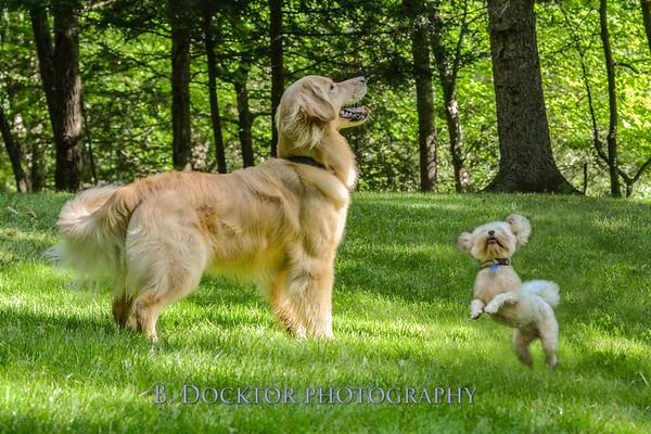 1408_Braffett dogs_120
