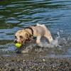1408_Braffett dogs_263