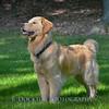 1408_Braffett dogs_078