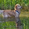 1408_Braffett dogs_185
