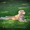 1408_Braffett dogs_140