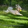1408_Braffett dogs_081