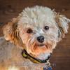 1408_Braffett dogs_310