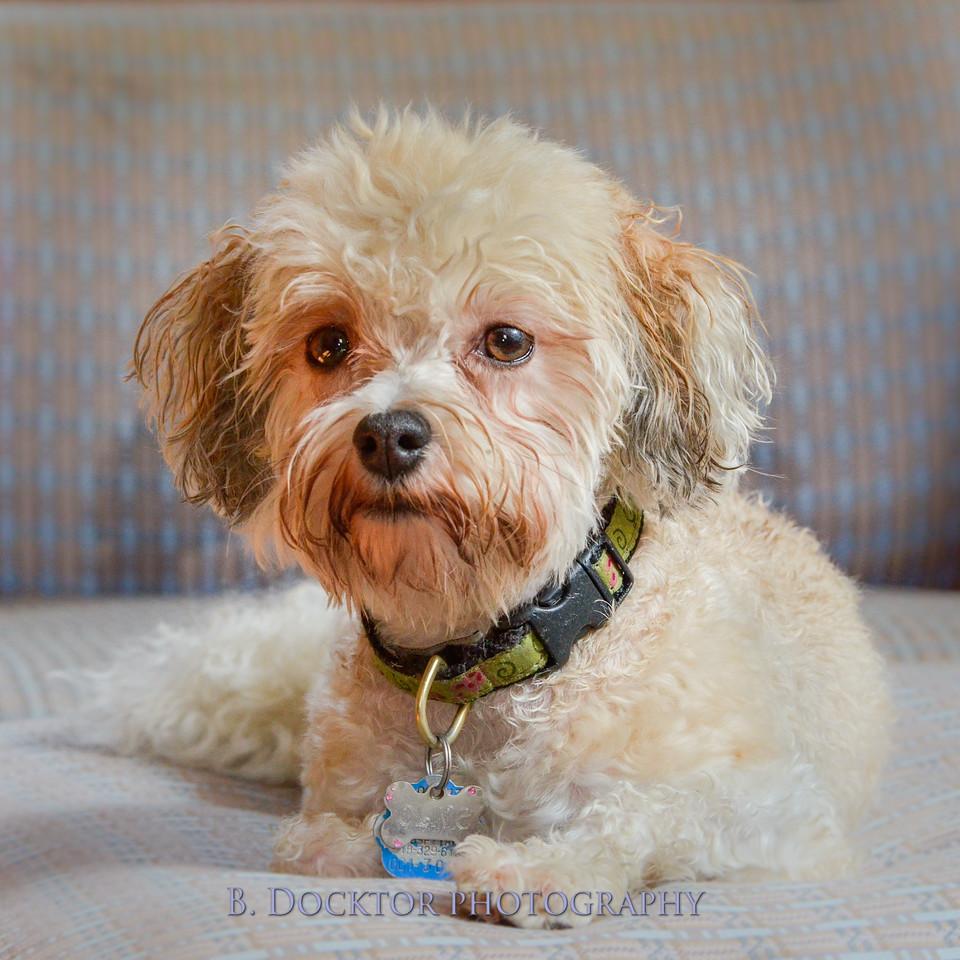 1408_Braffett dogs_297