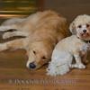 1408_Braffett dogs_318