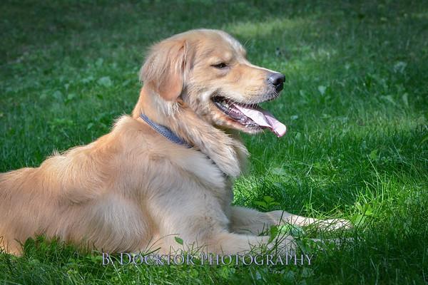 1408_Braffett dogs_141