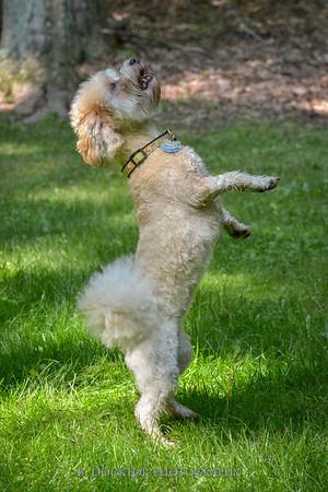 1408_Braffett dogs_159