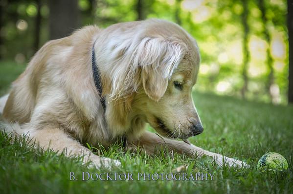 1408_Braffett dogs_130