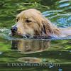 1408_Braffett dogs_033