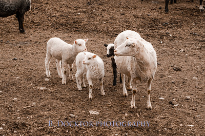 1304_Dashing Star Farm_009