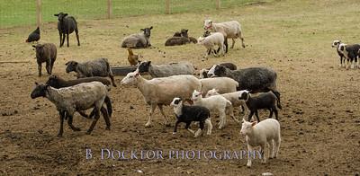 1304_Dashing Star Farm_004