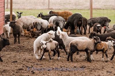 1304_Dashing Star Farm_031