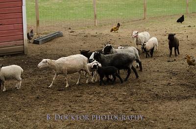 1304_Dashing Star Farm_007