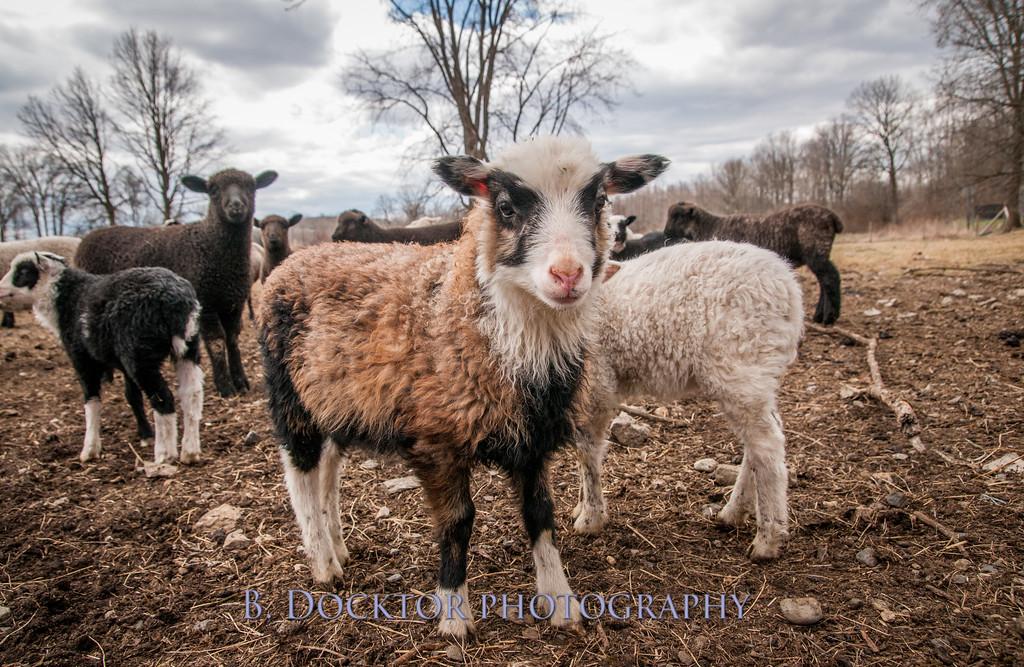 1304_Dashing Star Farm_156