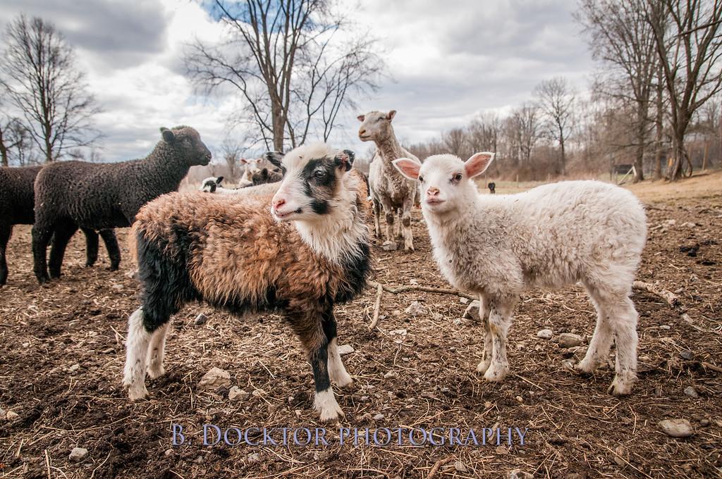 1304_Dashing Star Farm_158