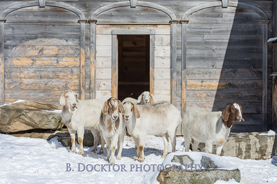 Kim Greenberg Farm Animals-22
