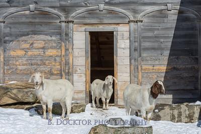 Kim Greenberg Farm Animals-26