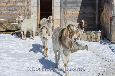 Kim Greenberg Farm Animals-23