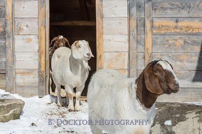 Kim Greenberg Farm Animals-28