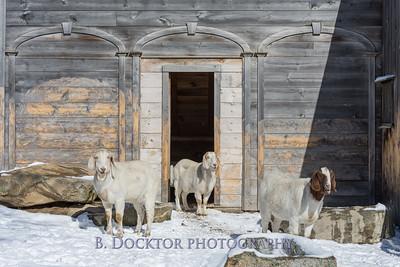Kim Greenberg Farm Animals-25