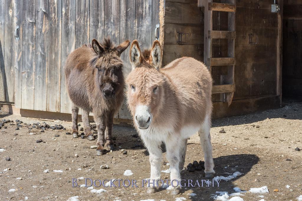 Kim Greenberg Farm Animals-98