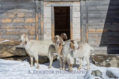 Kim Greenberg Farm Animals-17