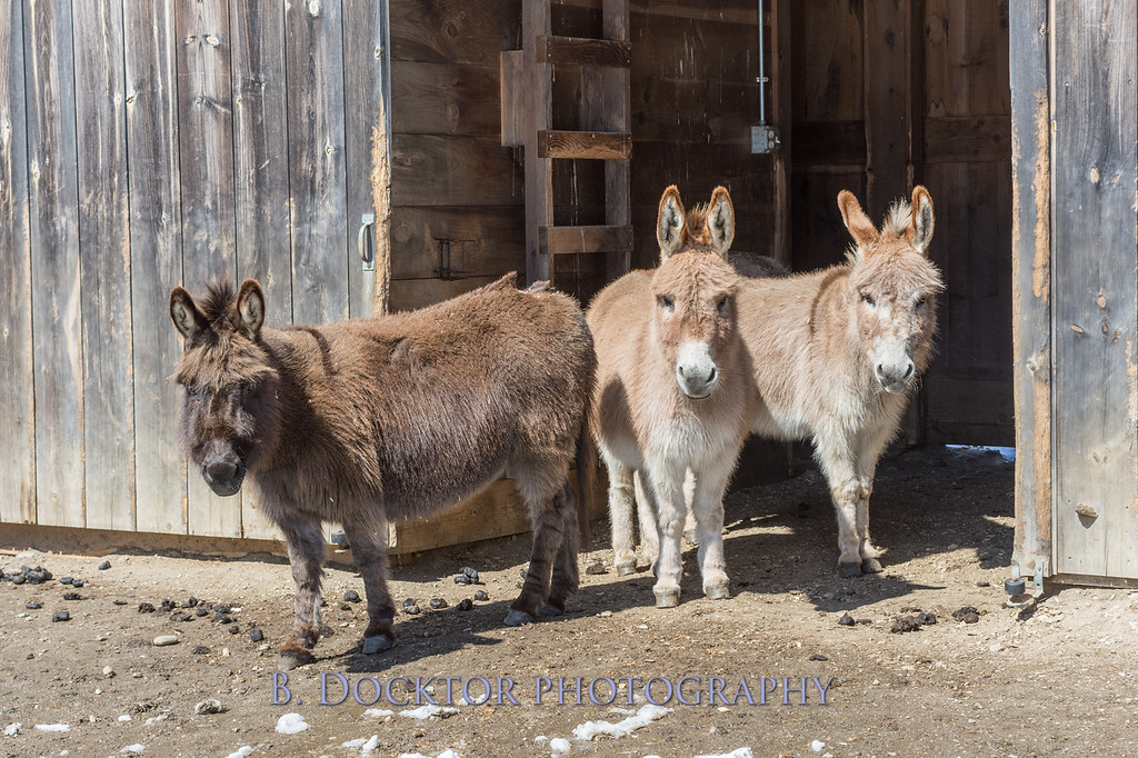 Kim Greenberg Farm Animals-95