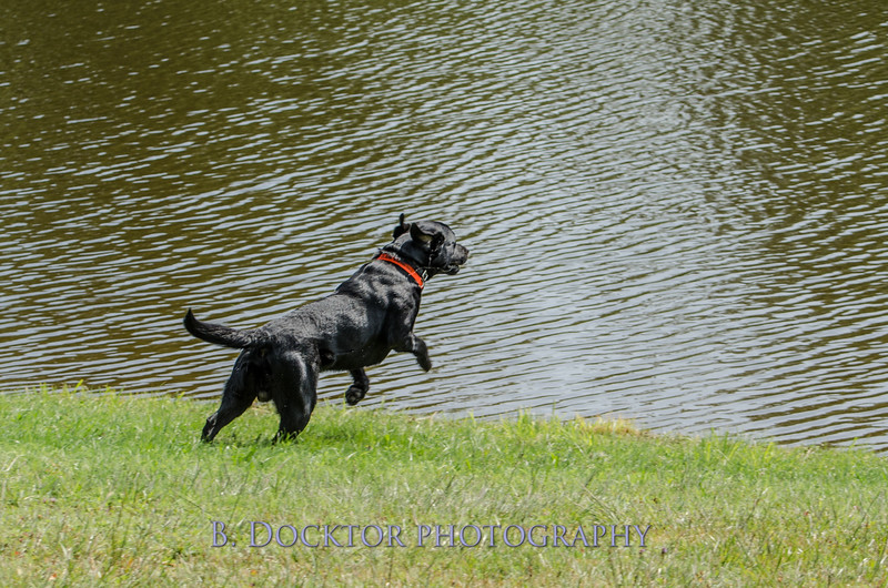 1308_SITFFR dog day_082