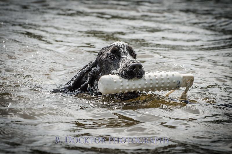 1308_SITFFR dog day_213