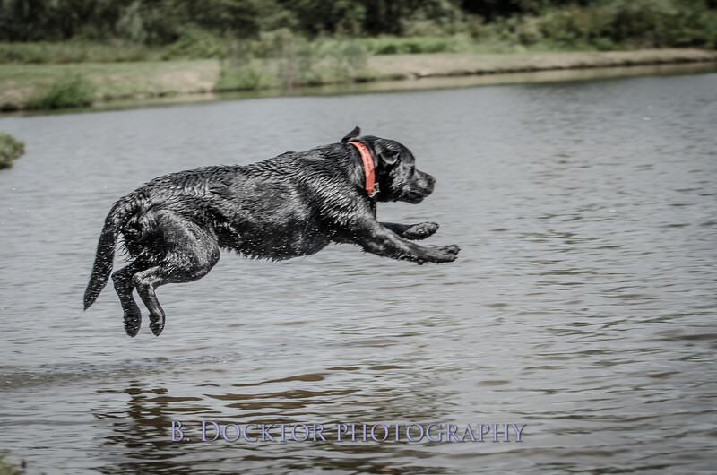 1308_SITFFR dog day_312