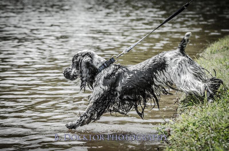 1308_SITFFR dog day_218
