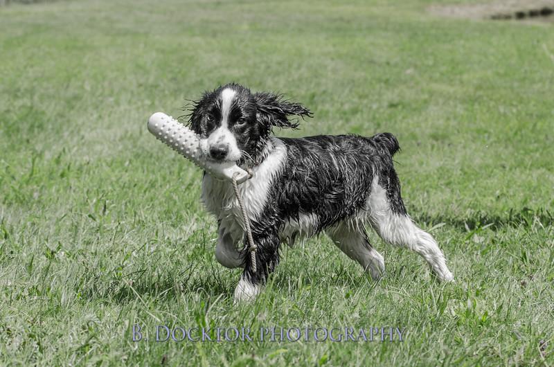 1308_SITFFR dog day_192