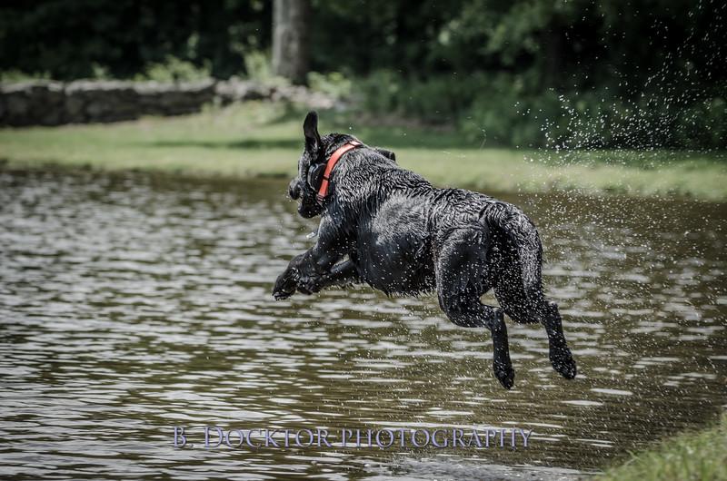 1308_SITFFR dog day_321