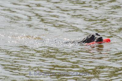 1308_SITFFR dog day_049