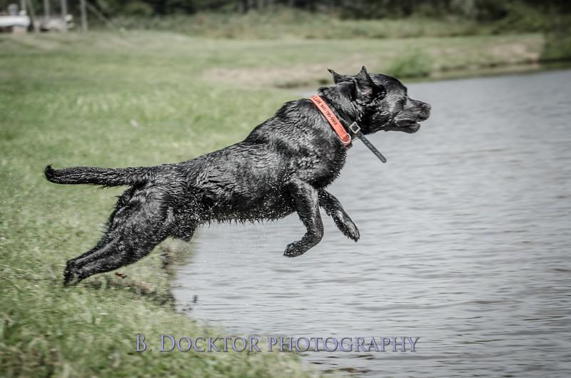 1308_SITFFR dog day_311