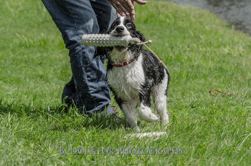 1308_SITFFR dog day_191