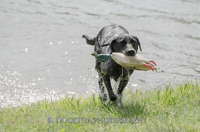 1308_SITFFR dog day_105