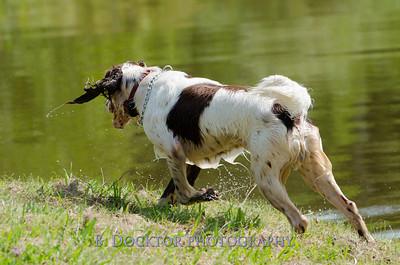 1308_SITFFR dog day_031